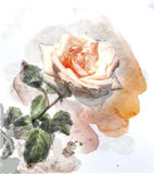 Watercolor image of a rose. Watercolor image of a  pink rose Stock Photo