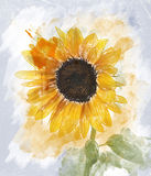 Watercolor Image Of  Sunflower Stock Photos