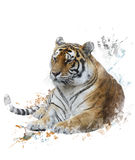 Watercolor Image Of Tiger Royalty Free Stock Photo