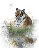 Watercolor Image Of Tiger Stock Image