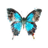 Watercolor Image Of Tropical Butterfly Royalty Free Stock Photos