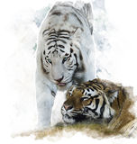 Watercolor Image Of  White And Brown Tigers Stock Photo
