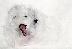 Watercolor image of white puppy dog yawning. Royalty Free Stock Images