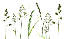 Watercolor and ink drawing plants Royalty Free Stock Image