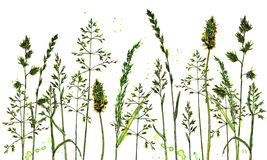Watercolor and ink drawing plants Royalty Free Stock Images