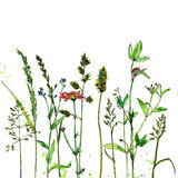 Watercolor and ink drawing plants Stock Photos