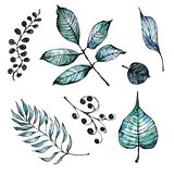 Watercolor and ink hand painted leaves and branches. stock illustration