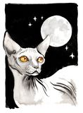Sphinx cat and starry sky. Watercolor and ink illustration of a hairless sphinx cat and night sky Royalty Free Stock Photos