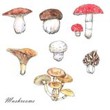 Watercolor and ink mushrooms illustrations. Hand drawn different wild forest mushrooms isolated on the white background Royalty Free Stock Photography