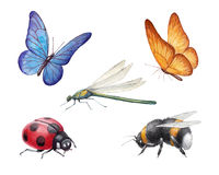 Watercolor insects illustrations Royalty Free Stock Images