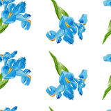 Watercolor iris flower seamless pattern Royalty Free Stock Images