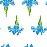 Watercolor iris pattern Stock Photography