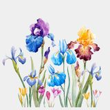 Watercolor iris vector composition. Beautiful vector composition with hand drawn watercolor iris flowers vector illustration