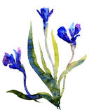 Watercolor Irises Stock Images