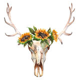 Watercolor isolated bull`s head with flowers and feathers on white background. Boho style. Skull for wrapping, wallpaper Royalty Free Stock Images