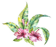 Watercolor isolated illustration of a pink hibiscus and leaves, tropical flower composition on a white background Royalty Free Stock Photos