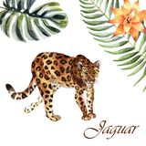 Watercolor jaguar isolated on a white background royalty free illustration