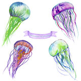 Watercolor jellyfish Stock Photography