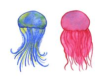 Watercolor jellyfish set  on white background Stock Images