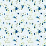 Watercolor juniper branches seamless pattern. Hand painted on a blue background Stock Images