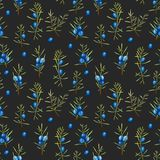 Watercolor juniper branches seamless pattern. Hand painted on a dark background Stock Photos