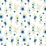 Watercolor juniper branches seamless pattern. Hand painted on a white background Royalty Free Stock Photography