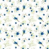 Watercolor juniper branches seamless pattern. Hand painted on a white background Stock Photography