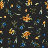 Watercolor juniper and sea buckthorn branches seamless pattern. Hand painted on a dark background Royalty Free Stock Image