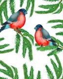 watercolor Kerstmiskroon met spartakken met twee goudvinken stock illustratie