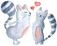 Watercolor kissing cats Stock Image