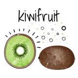 Watercolor kiwi fruit. Vector illustration. Watercolor kiwi fruit. Illustration on white background stock illustration