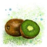 Watercolor kiwifruit Stock Image