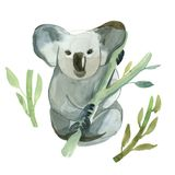 Watercolor koala is holding the bamboo branch Royalty Free Stock Photo