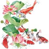 Watercolor koi carp and lotus flower. watercolor fish background illustration. Watercolor koi carp and lotus flower illustration Royalty Free Stock Photography
