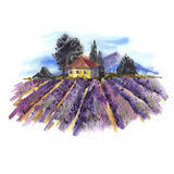 Watercolor landscape with blooming lavender. Watercolor landscape with blooming violet lavender field Stock Image