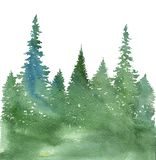 Watercolor landscape with fir trees. And grass, abstract nature background, coniferous forest template, hand drawn illustration Stock Photos