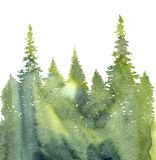 Watercolor landscape with fir trees. And grass, abstract nature background, coniferous forest template, hand drawn illustration Stock Images