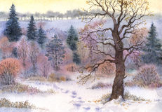 Watercolor landscape. Oak in the woods in winter the valley Royalty Free Stock Images