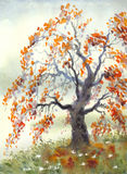 Watercolor landscape. Old autumn tree in foggy day Stock Photos