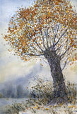 Watercolor landscape. The old tree in late autumn Royalty Free Stock Image