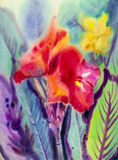Watercolor landscape original painting colorful of canna lily flowers. Royalty Free Stock Photo
