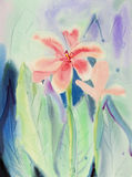 Watercolor landscape original painting colorful of canna lily flowers. Stock Photos