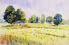 Watercolor landscape painting colorful of cottage and rice field. Watercolor landscape original painting on paper colorful of cottage and rice field in the Royalty Free Stock Photography