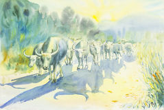 Watercolor landscape painting colorful of mountain buffalo Stock Images