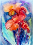 Watercolor landscape painting on paper colorful of canna lily flower. Royalty Free Stock Images