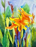 Watercolor landscape paintings original colorful of Canna Lily stock illustration
