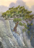 Watercolor landscape. Pine among cliffs Stock Image
