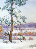 Watercolor landscape. Pine tree in the winter steppe Royalty Free Stock Photos