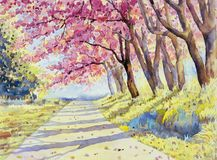 Watercolor landscape pink red color of Wild himalayan cherry. Painting watercolor landscape pink red color of Wild himalayan cherry roadside in the morning with stock illustration