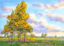 Watercolor landscape. The trees in the evening field Royalty Free Stock Photo